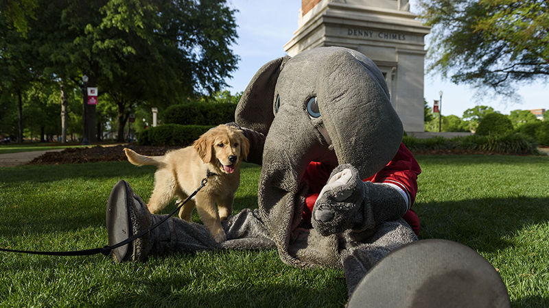 Big Al sits on the quad with a puppy